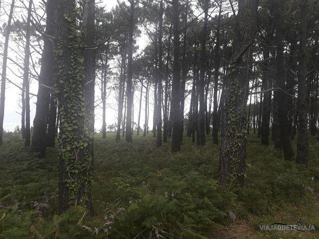 Ruta por los acantilados Asturianos 42